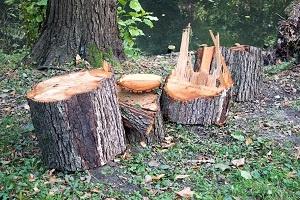 remove the tree
