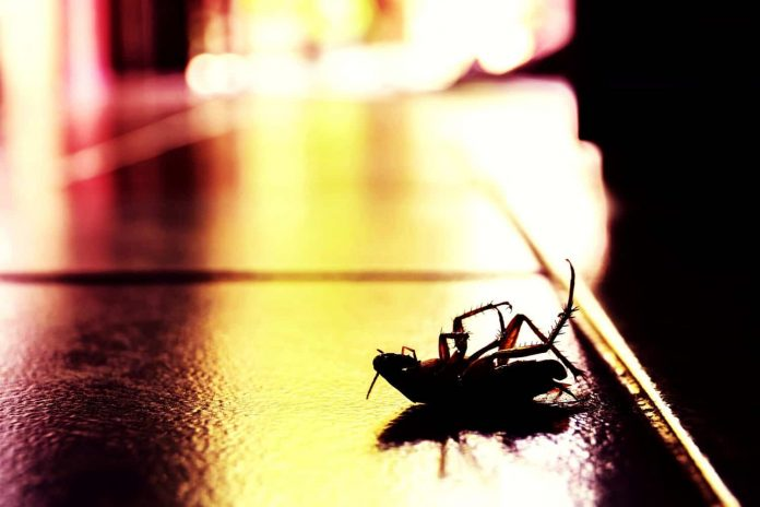 Commercial Pest Control Company